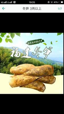 福建福州晋安区冬笋 17~21cm 鲜笋
