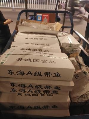 福建宁德霞浦县东海带鱼 野生 0.5龙8国际官网官方网站以下