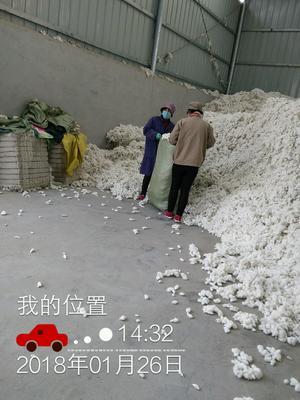 安徽蚌埠怀远县籽棉