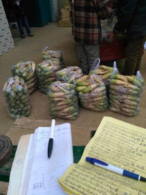 湖北襄樊襄州区青皮萝卜 1~1.5斤
