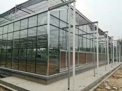 山东潍坊青州市玻璃温室大棚