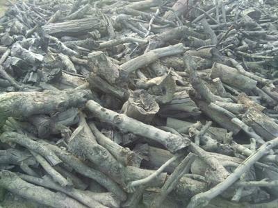 辽宁省葫芦岛市绥中县果木木炭