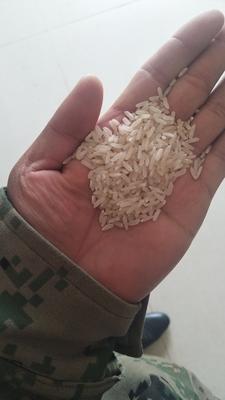 湖北襄樊宜城市杂交稻 中稻