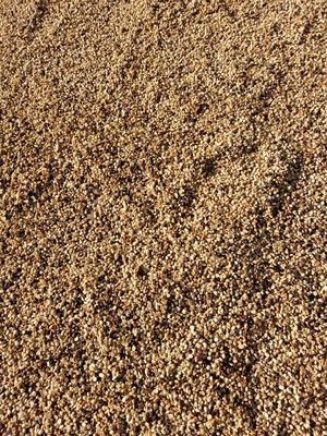 云南西双版纳景洪市普洱小粒咖啡豆