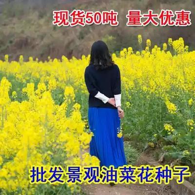 江苏省宿迁市沭阳县油菜籽种子