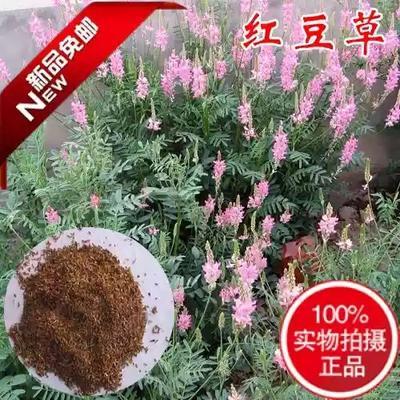 江苏宿迁沭阳县红豆草种子
