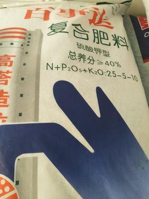 四川雅安汉源县红根蒜苗 45 - 50cm