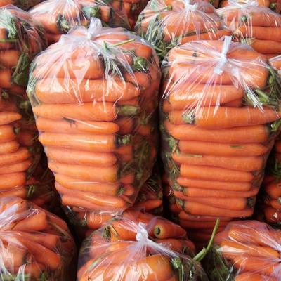 福建省莆田市仙游县三红胡萝卜 15cm以上 3两以上 3~4cm