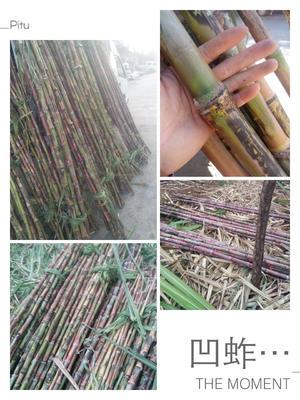 云南楚雄元谋县罗汉甘蔗 2.5 - 3m 4 - 5cm