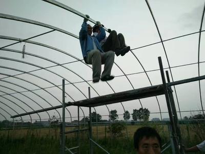 安徽滁州全椒县钢管大棚