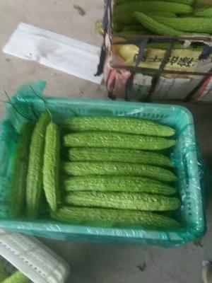 河南安阳内黄县带刺黄瓜 18~22cm 鲜花带刺