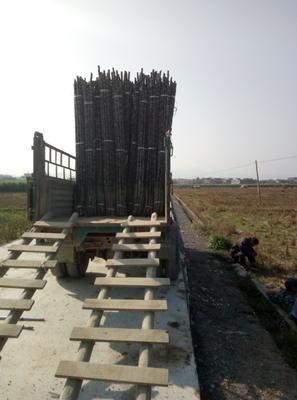 广西玉林玉州区黑皮甘蔗 2.5 - 3m 4 - 5cm
