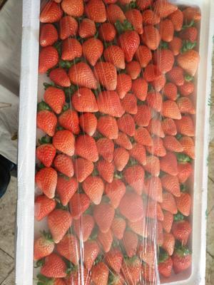 内蒙古自治区鄂尔多斯市东胜区奶油草莓 20克以下
