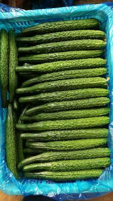 山东德州德城区密刺黄瓜 22~25cm 干花带刺
