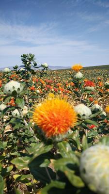 新疆维吾尔自治区塔城地区托里县红花籽油