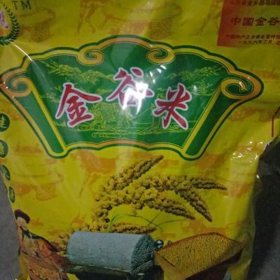 山东济宁汶上县金谷小米