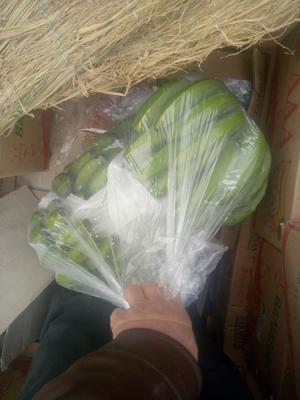 河北邯郸邯郸县威廉斯香蕉 七成熟 40 - 50斤