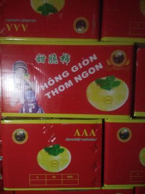 青海省西宁市城北区脆柿 3 - 4两以上