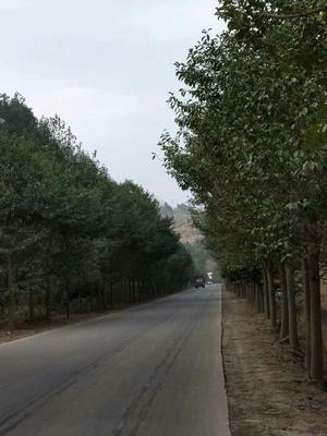 江西省赣州市崇义县乐昌含笑