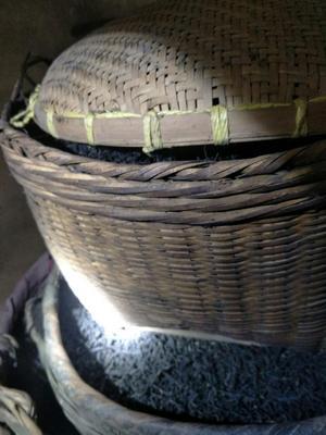 广西壮族自治区梧州市蝶山区广西六堡茶 散装 二级