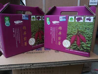 贵州黔东凯里市紫板薯 2-5两