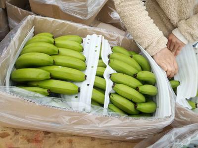 云南红河河口瑶族自治县河口香蕉 八成熟 40斤以下
