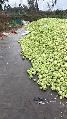 四川眉山东坡区疙瘩榨菜