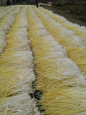 安徽宿州萧县品种不限 头茬 40~50cm