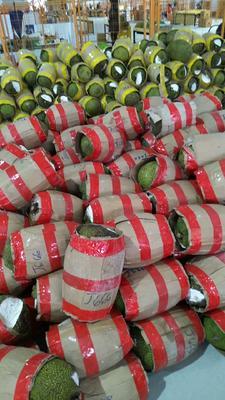 广西崇左凭祥市越南菠萝蜜 15斤以上