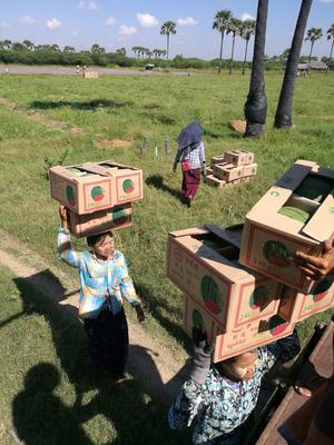 云南德宏瑞丽市缅甸无籽西瓜 无籽 1茬 8成熟 8斤打底