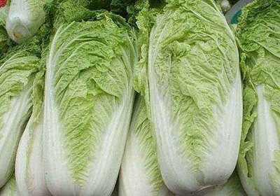 山东省枣庄市滕州市北京三号大白菜 3~6斤 净菜