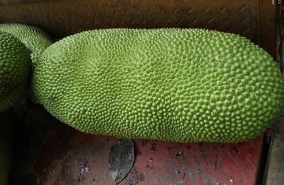 安徽亳州谯城区海南菠萝蜜 10-15斤
