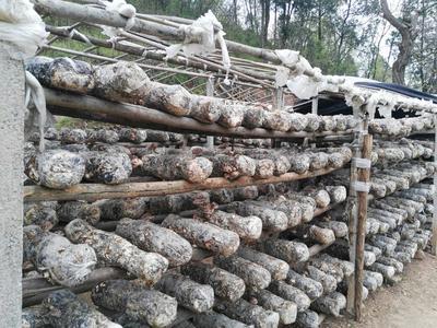 湖北随州曾都区原木干香菇 礼盒装 半年