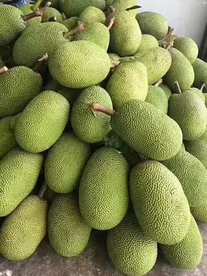 广西崇左凭祥市越南菠萝蜜 10斤以下