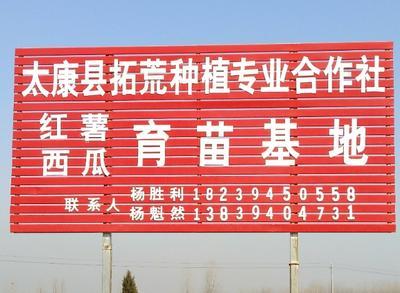 河南周口扶沟县辣椒王 10~15cm 中辣