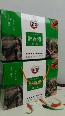 云南昭通镇雄县野香猪 100斤以上