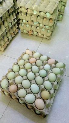 山西运城新绛县绿壳鸡蛋 食用 礼盒装