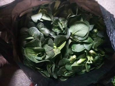 江苏省泰州市姜堰区青菜泡菜