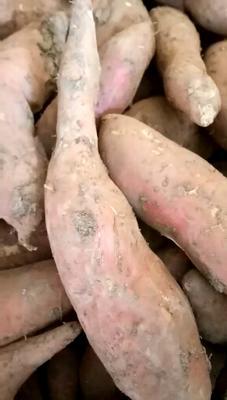 河北廊坊安次区烟薯25 红皮 4两以上
