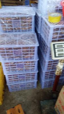 广西桂林平乐县黄金红薯干 条状 袋装 1年