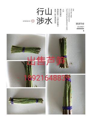 江苏南通海门市绿芦笋 32cm以上 13mm以上