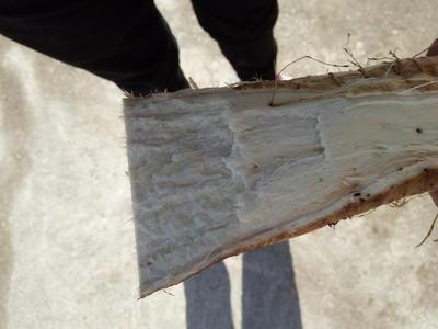 江西景德镇乐平市人工种植葛根 4.5斤以上