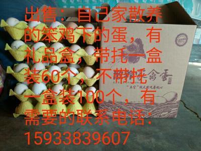 河北衡水武强县柴鸡蛋 食用 礼盒装