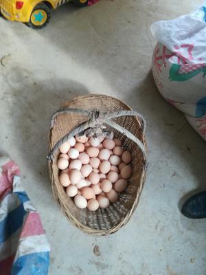 安徽六安金寨县土鸡蛋 食用 礼盒装