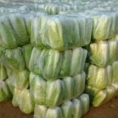 山东省济宁市泗水县北京三号大白菜 3~6斤 净菜