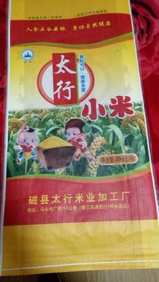 河北邯郸磁县大金苗