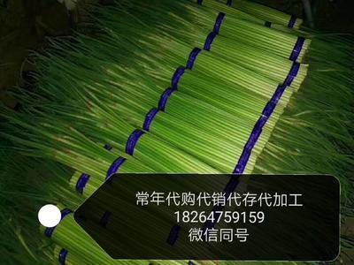 山东济宁金乡县红帽蒜薹 一茬 60~70cm 精品