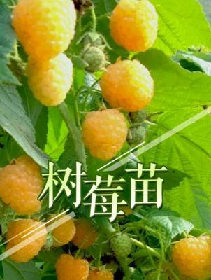 云南省昆明市富民县黄刺玫