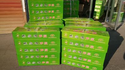 山东省青岛市平度市平度芹菜 55~60cm 露天种植 0.5~1.0斤