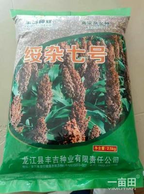 吉林省松原市乾安县绥杂7号种子 种子